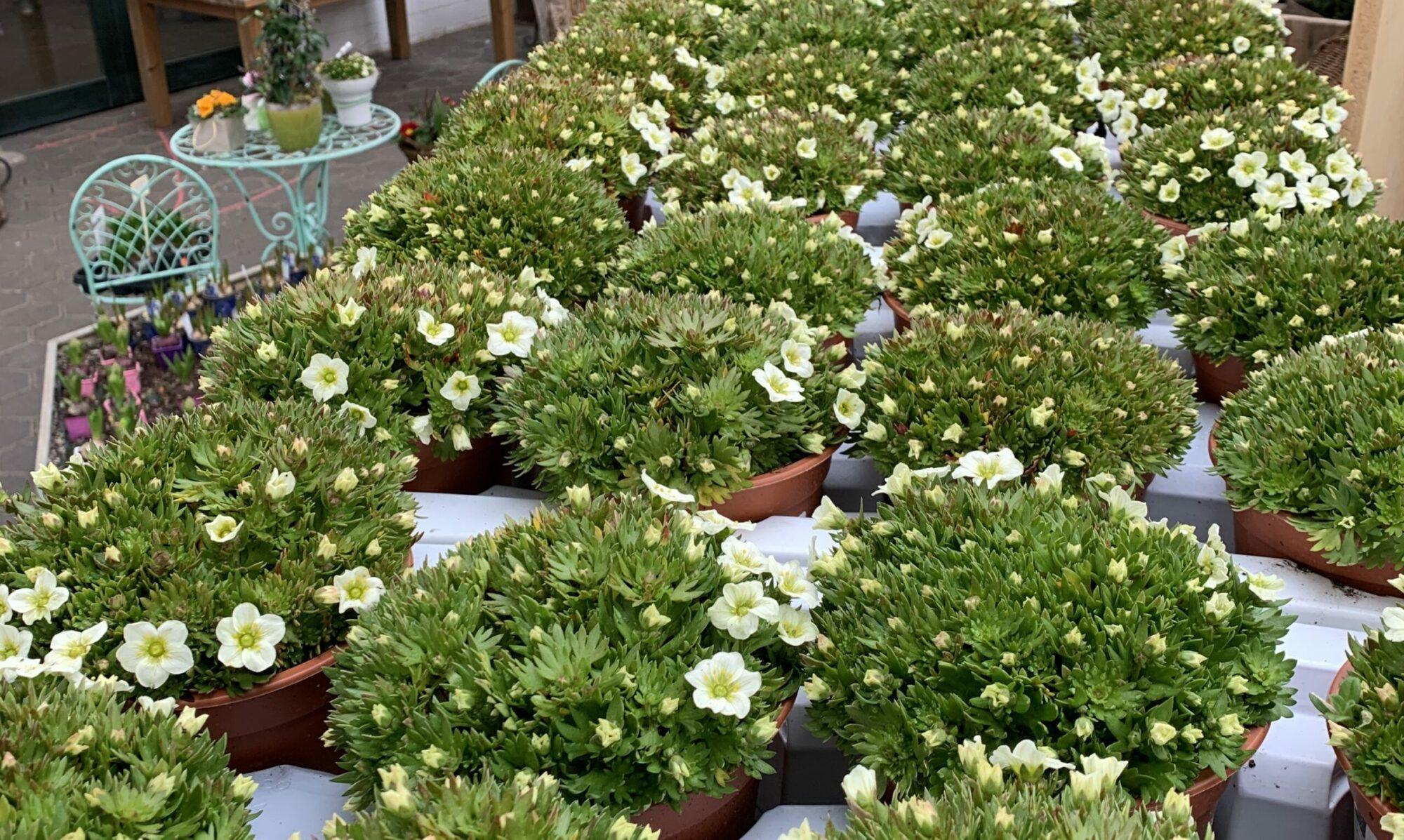 Gärtnerei van der Bloemen